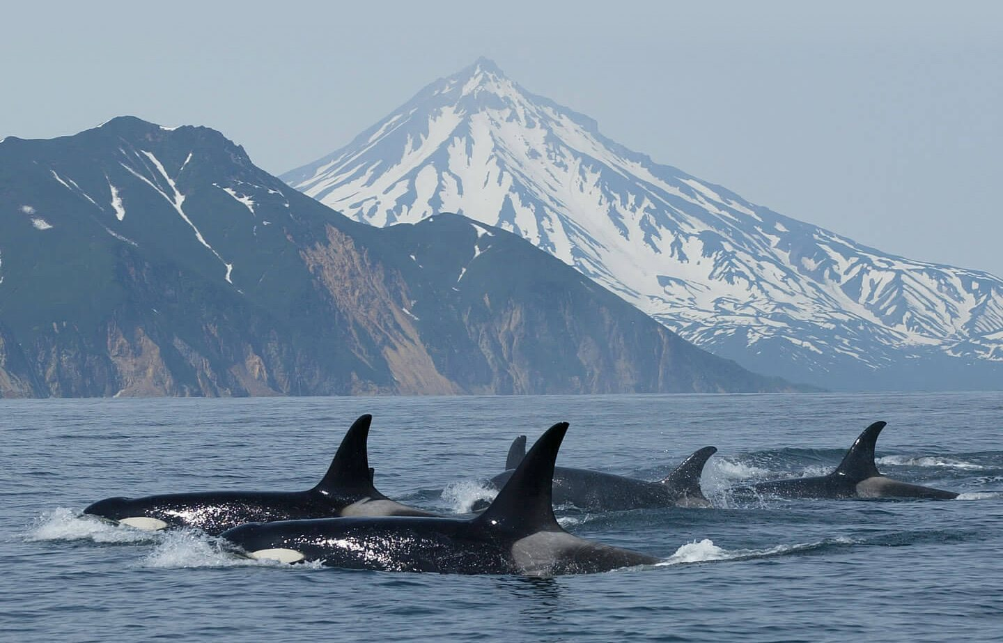 orcas_global_bg