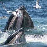 humpback-whale-sue-rocca