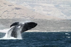 Candidate conservation areas earmarked in Western Indian Ocean and Arabian Seas