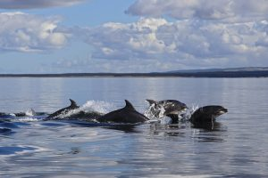WDC partners make waves with Oceans Day celebrations