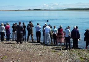Dolphin watching at Spey Bay, Scotland